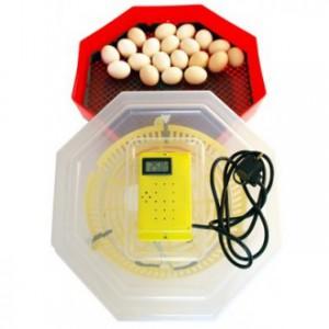 incubator_electric_oua_cu_termostat_cleo_5t_ieftin_oferta-330x330